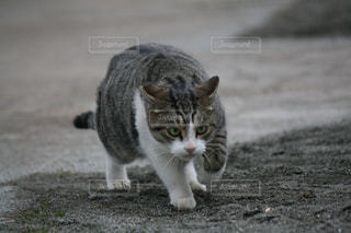 土の中に立っている猫 - No.918444