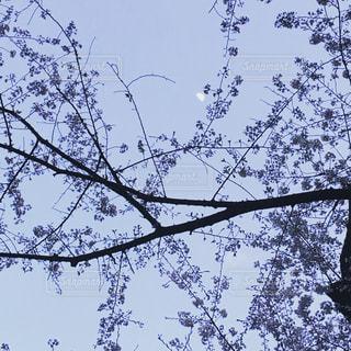 ツリーの側に座っている鳥の群れの写真・画像素材[915410]