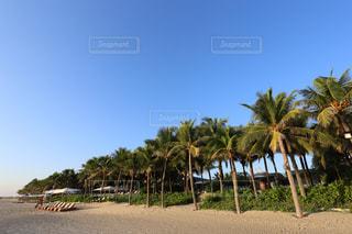 プライベートビーチのヤシの木の写真・画像素材[915466]