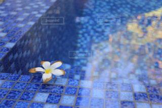 プールに浮かぶ花びらの写真・画像素材[919149]