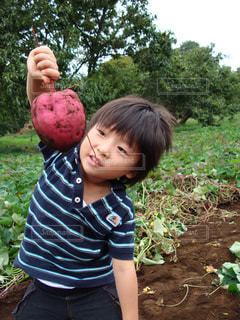 芋掘り-0001 - No.924624