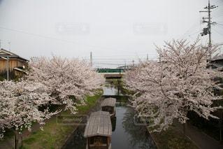 伏見の運河の写真・画像素材[924626]