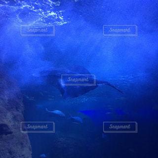 江ノ島水族館のエイの写真・画像素材[915644]