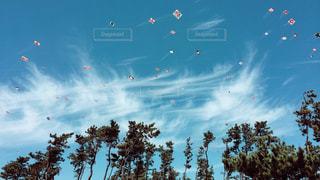 凧を揚げの写真・画像素材[916146]