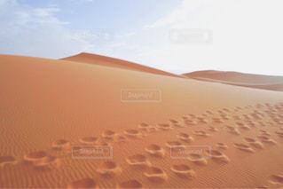 サハラ砂漠の写真・画像素材[916335]