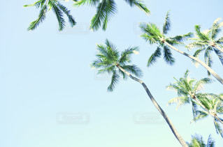 ハワイの写真・画像素材[1180313]