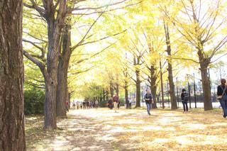 木の隣に立っている男の写真・画像素材[916760]