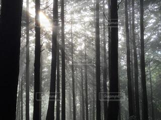 陣馬山までの道のり 森の中でソーラービームの写真・画像素材[919402]