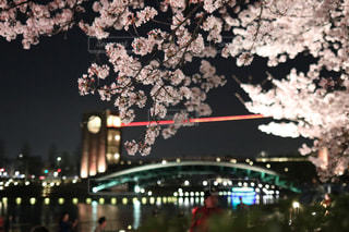桜と環水公園の写真・画像素材[1186877]