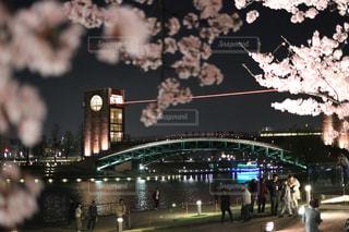 桜と環水公園の写真・画像素材[1186878]