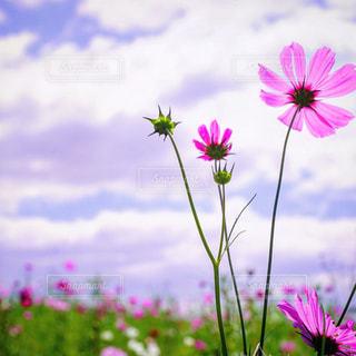 近くの花のアップ - No.916964