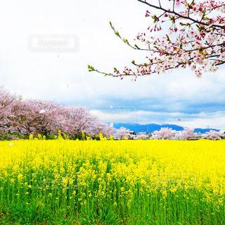 春の陽気 - No.916966