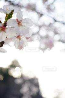 花のぼやけた画像 - No.1130763
