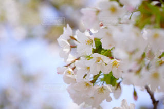 春の訪れ - No.1130765