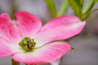 花を愛でる楽しみ - No.1130766