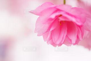 近くの花のアップ - No.1130770