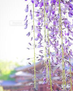 植物の紫色の花 - No.1164237