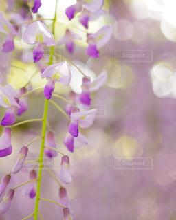 近くの花のアップの写真・画像素材[1164239]