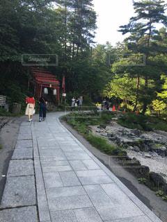 遊歩道の奥 神社鳥居 木々の緑の写真・画像素材[920148]