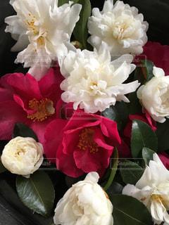 近くの花のアップ - No.920755