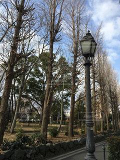 街灯 並木道の写真・画像素材[967518]