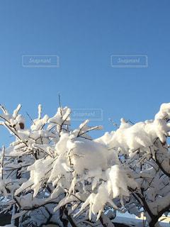 雪晴れの写真・画像素材[972638]