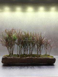 盆栽の写真・画像素材[983592]