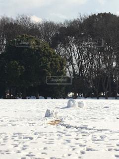 雪の広場の写真・画像素材[983602]