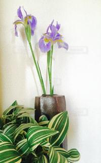 紫色の花一杯の花瓶の写真・画像素材[1150742]