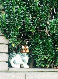 緑の葉の木の写真・画像素材[1595682]