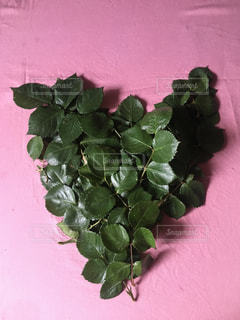 植物の葉の写真・画像素材[2135006]