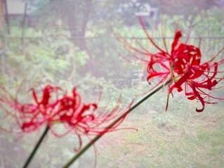 花のクローズアップの写真・画像素材[3698011]