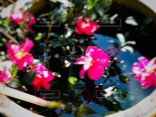 花のクローズアップの写真・画像素材[3939059]