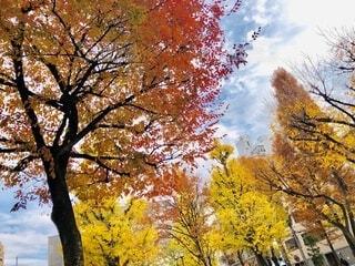 大きな木の写真・画像素材[3974736]