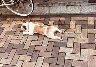 歩道に横たわっている犬の写真・画像素材[4290259]
