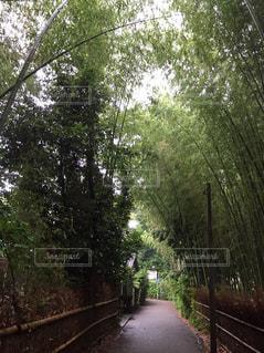 京都の竹林の写真・画像素材[919062]