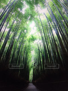 竹林 京都の写真・画像素材[919063]