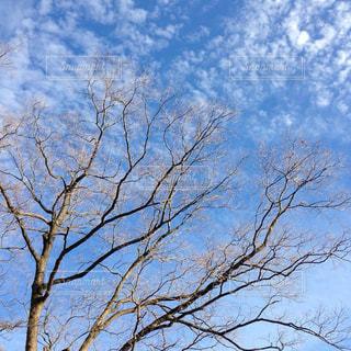 曇り青空の前に木 - No.918319