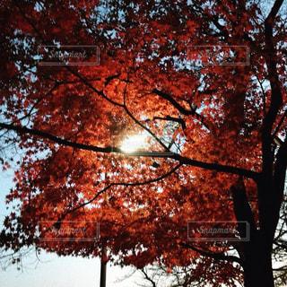 近くの木のアップ - No.918320