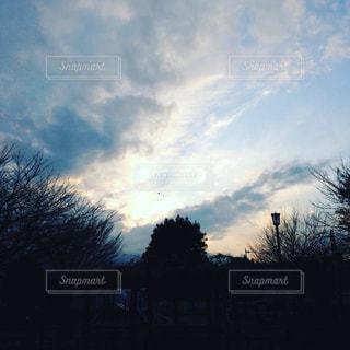 暗い曇り空の木 - No.918321