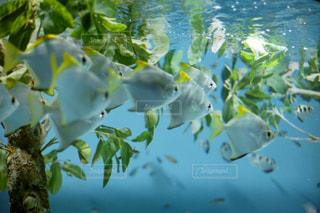 サンシャイン水族館の写真・画像素材[923316]