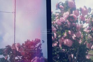 花と空の写真・画像素材[1134847]
