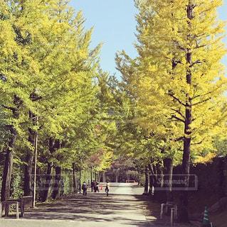 フォレスト内のツリー - No.918260
