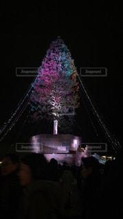 メリケンパークのクリスマスツリーの写真・画像素材[919643]