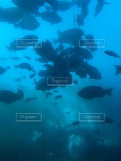 水中を泳ぐ鳥の群れの写真・画像素材[920967]