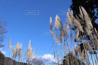 冬の晴れた空にの写真・画像素材[920143]