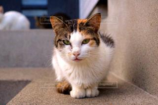 島でのんびり暮らす猫の写真・画像素材[920683]