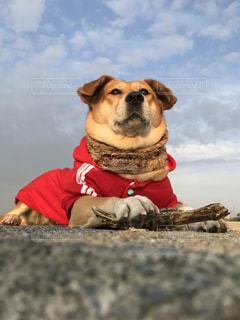 完全に固まる犬の写真・画像素材[921002]