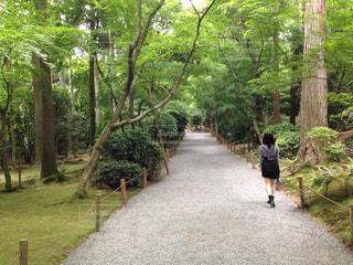 京都観光の写真・画像素材[1605198]