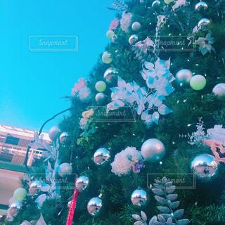 クリスマスツリーの写真・画像素材[921371]